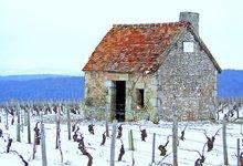le vignoble de Sancerre sous la neige