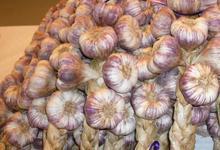 L'ail violet de Cadours