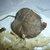 Les tripous du Rouergue