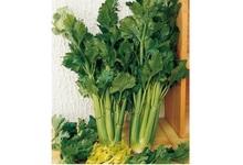 celeri branche vert d'Elne