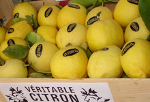 citron de menton