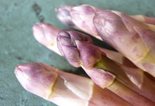 asperges de Sologne