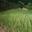 champ d'oignons doux