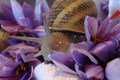 Les Croqueurs de Salades - Safran Bio et Escargots