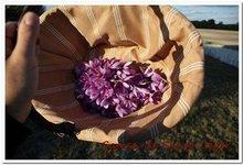 fleur safran