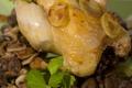 Poulet de Bresse aux champignons et aux marrons