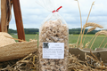 Le Ruyet, spécialités culinaires au blé tendre