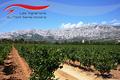 Association des Vignerons de la Sainte-Victoire