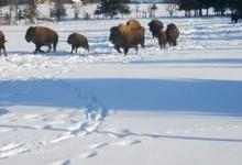 La Combe Aux Bisons