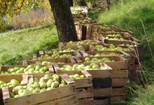 Jus de poire de Haute Provence