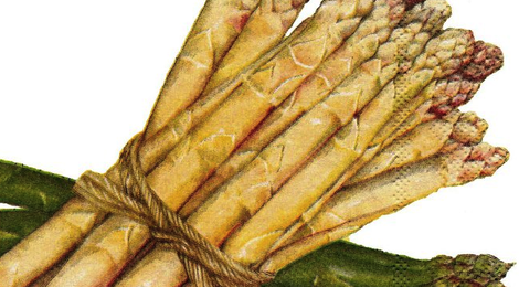 asperges blanches et vertes