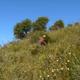 Corsica PAM, La Maison des senteurs