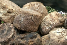 Pinzuti Lionel, bergerie de Cilecci