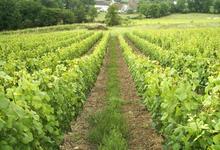 Domaine Les Vignes Blanches