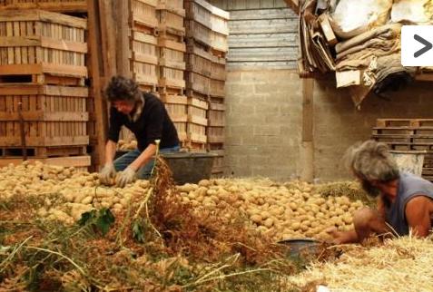 association payzons ferme pommes de terre producteur morbihan. Black Bedroom Furniture Sets. Home Design Ideas