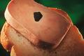 Georges Bruck, foie gras