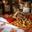 Cassoulet Landais aux Haricots Tarbais - bocal 1000 g