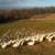 Montes-des-canards-dans-le-parc_opt
