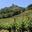 Marché aux Vins des Côtes du Rhône Septentrionales