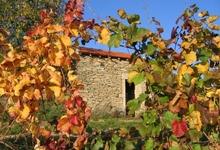 Domaine Thevenot le Brun