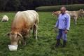 EARL des Marroniers, viande bovine