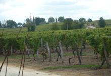 Domaine de la Gauche