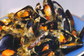  Moules A LOseille