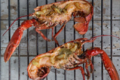 Homard grill au beurre  l'ail