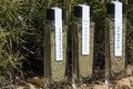 Condiment herbes de garrigue