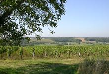Domaine De Belliviere