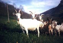 Chèvrerie de Villarenger