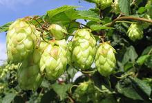 La Bière du Plateau