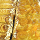 Tartes fines  pommes, abricots ou poires