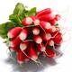 botte de radis rose