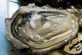 Huîtres fines de pleine mer  à Saint-Germain-sur-Ay