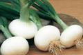 Botte Oignons Blancs Bio