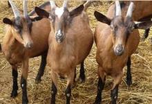 ferme de Guillounet, EARL MARRE
