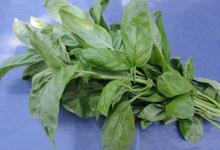 Botte basilic à grosses feuilles