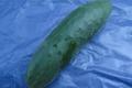 Concombre cornichon à la pièce