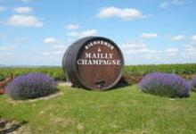 Champagne Vanzella