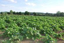 La ferme de la rhubarbe, confitures d'autrefois