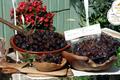 Olives noires de Nyons AOP