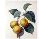 Nectar De Fruit : Abricot