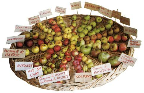 La ferme d 39 hotte producteur aube - Variete de pomme de terre ancienne ...