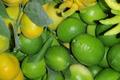 lime tahitienne et méxicaine