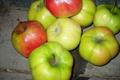Pomme d'Api étoilée (ancienne variété)