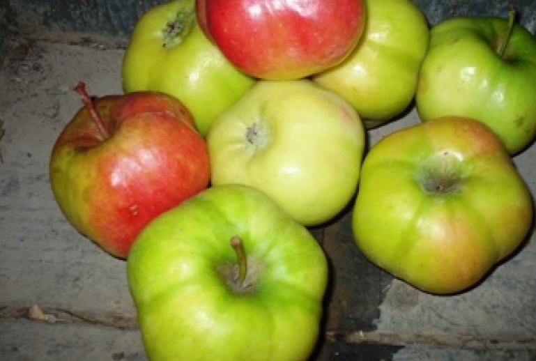 Pomme d 39 api toil e ancienne vari t - Variete de pomme de terre ancienne ...