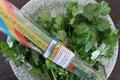 bouquet de coriandre bio