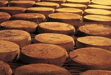 tout un fromage