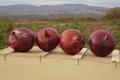 Oignons Rouges Bio